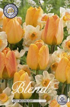Tulipa/Narcissus Moonlight x20     (12/+)