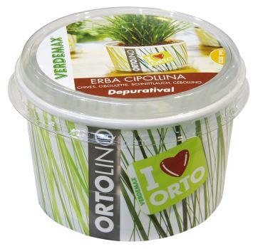 Ortolino - Pažítka - VERDEMAX - nádobka, kokosový substrát, rýchlovzchádzajúce osivo