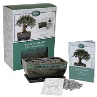 BEES Grow Your Own Bonsai sets - Olive-G PLANTS