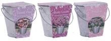 BEES Flower Galvanised Bucket Grow set - Busy Lizzie-G PLANTS