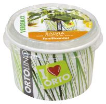 Ortolino - Šalvia - VERDEMAX - nádobka, kokosový substrát, rýchlovzchádzajúce osivo