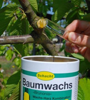 Prípravok - stromový vosk - SCHACHT BRUNONIA - 250 g