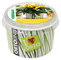 Ortolino - VERDEMAX - yellow chillie