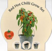 BEES TomatoChilli Galvanised Bucket Grow Set - Naga Bhut Jolokia-G PLANTS