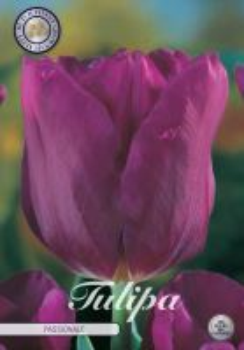 Tulp Triumph Passionale x10     (12/+)